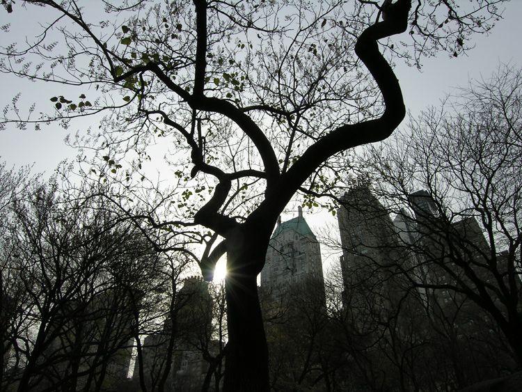 snake, trees, New York