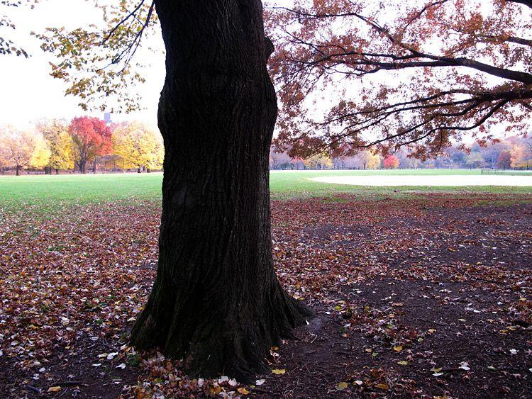 tree, colors, New York