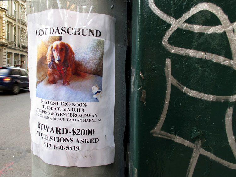 lost, found, New York