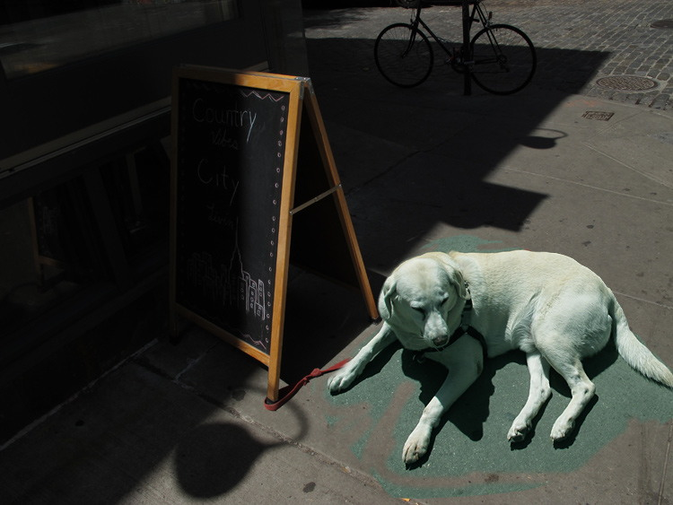 dog, day, New York