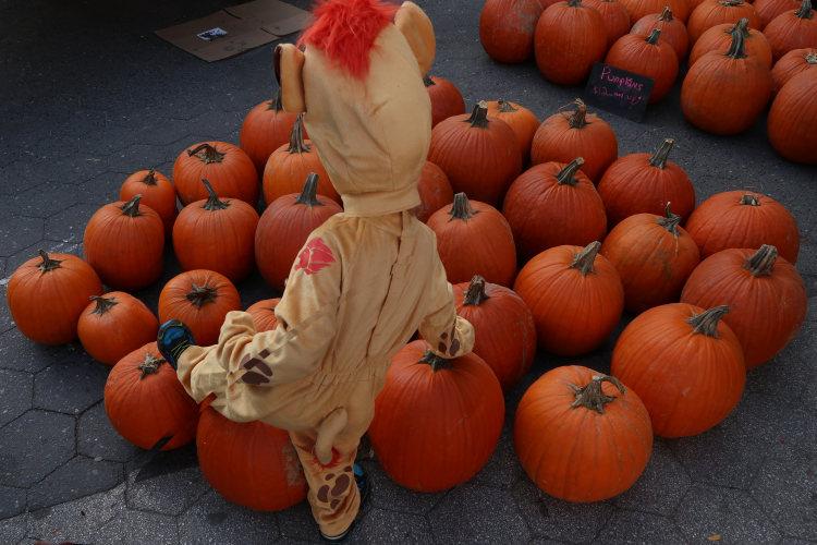 New York going pumpkin
