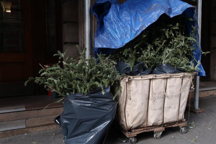New York O tannenbaum